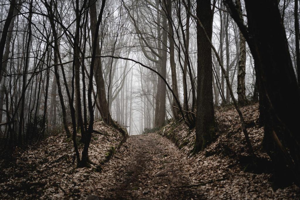 bois de rambouillet brouillard 78