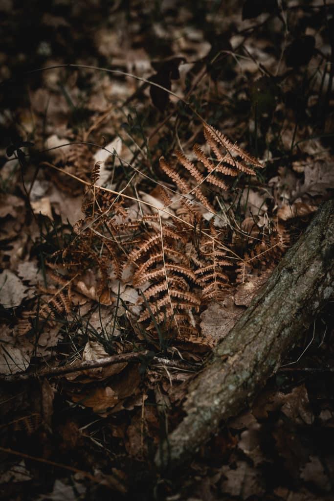 photo de feuille dans les bois