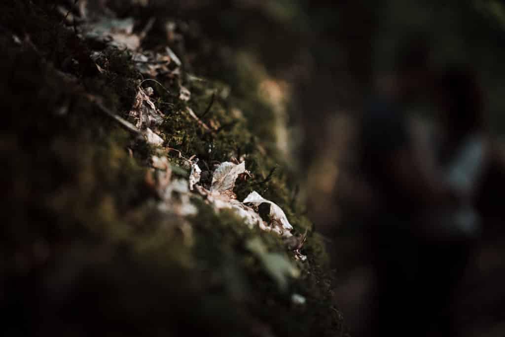 détails mousse sur rocher dans les bois de rambouillet pendant une séance photo de couple