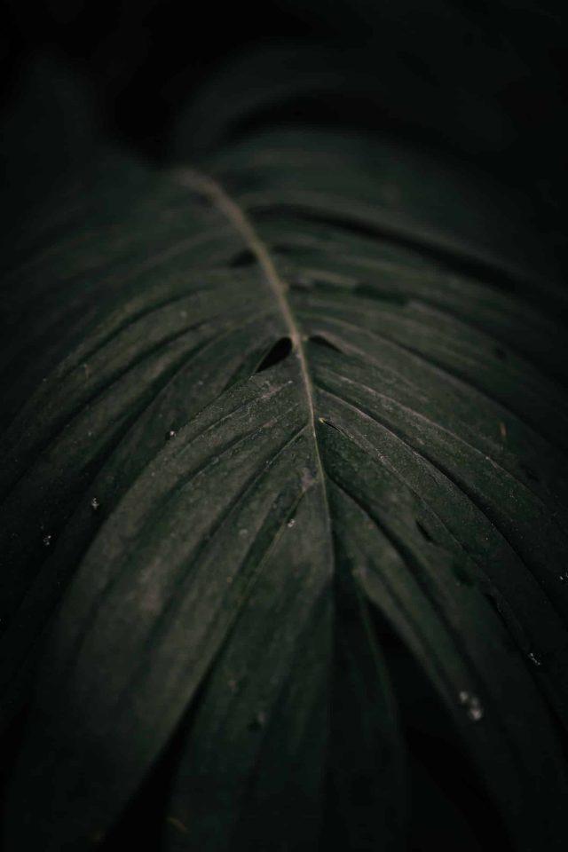 feuille tropicale par samantha guillon photographe mariage et lifestyle en ile de france