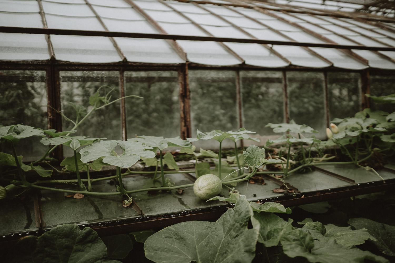 serre du domaine du chateau de verderonne par samantha guillon photographe